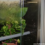 Haltung, Morelia viridis, Grüner Baumpython, Chondropython, Terrarienanlage, Technik,