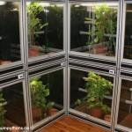 Terrarienanlage Morelia viridis, Grüner Baumpython, Chondropython