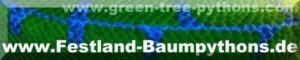 Banner Festland Baumpythons, green-tree-pythons